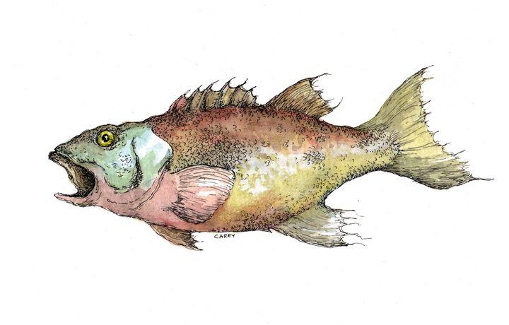 Fish or Cut Bait - Rob Carey Art