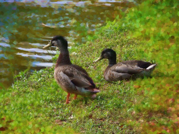 Duck Pond Ducks - Pepsiart