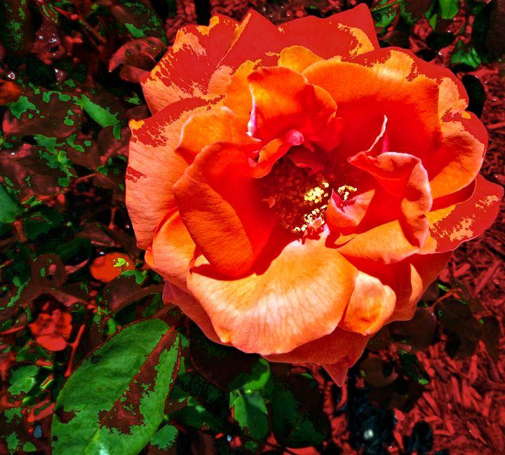 FLOWER 162 - Pepsiart