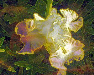 flowers 194 - Pepsiart