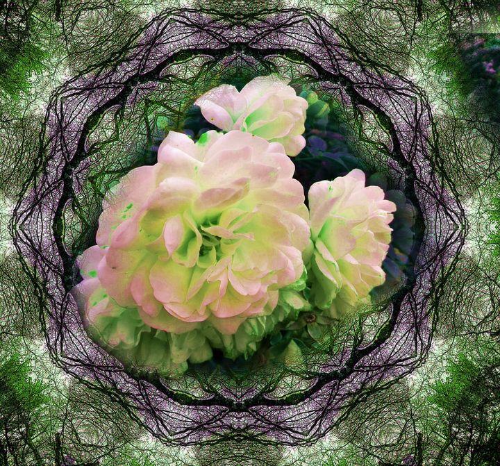 lace roses - Pepsiart