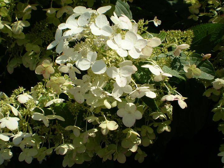 Flower29 - Pepsiart