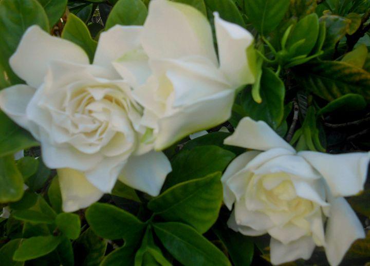 Flower31 - Pepsiart