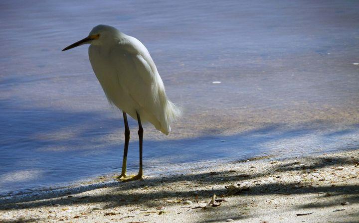 Bird27 - Pepsiart