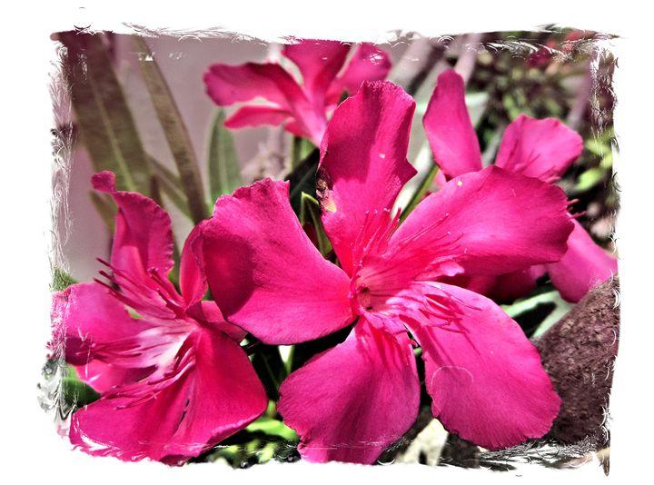Flower 42 - Pepsiart