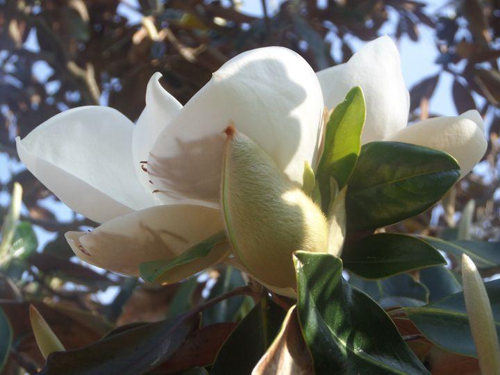 Flowers 52 - Pepsiart