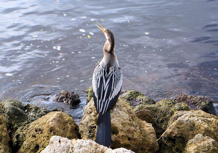 Bird36 - Pepsiart