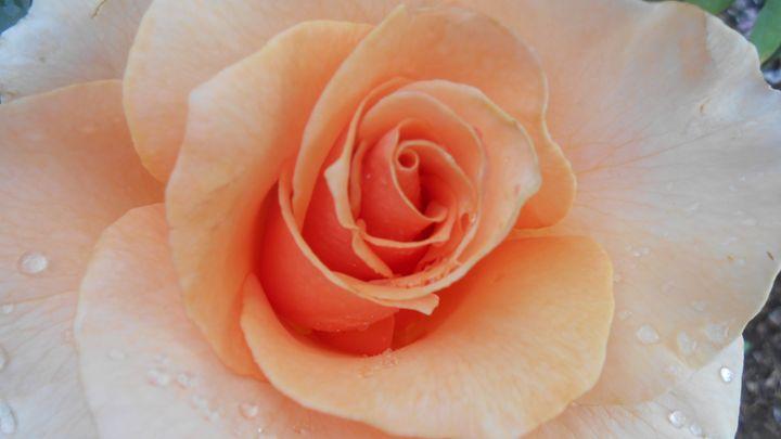 Flower 59 - Pepsiart