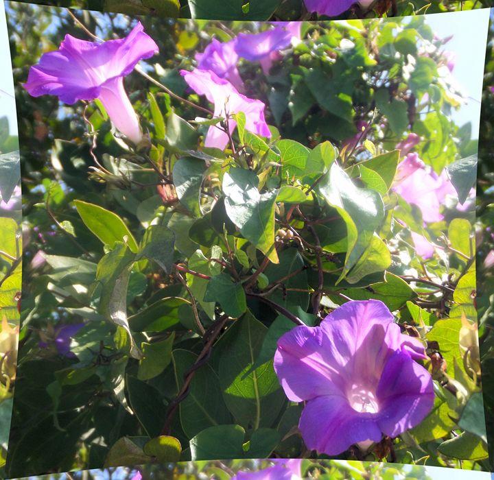 Flower 73 - Pepsiart