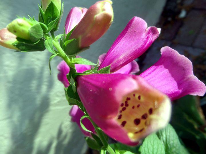 FLOWERS 87 - Pepsiart