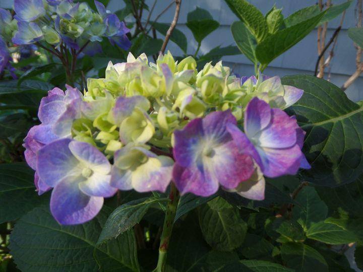 FLOWERS 115 - Pepsiart