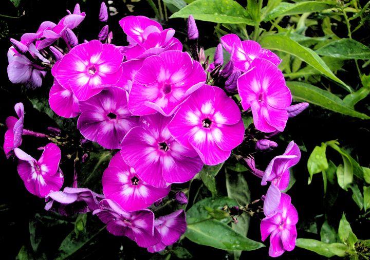 FLOWERS 127 - Pepsiart