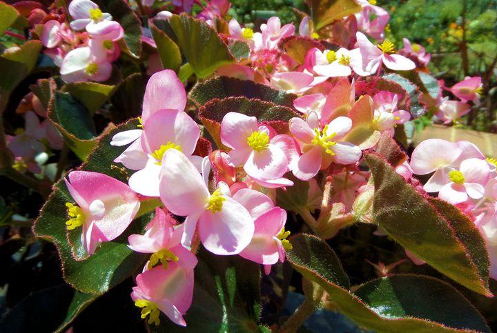 Flowers 137 - Pepsiart