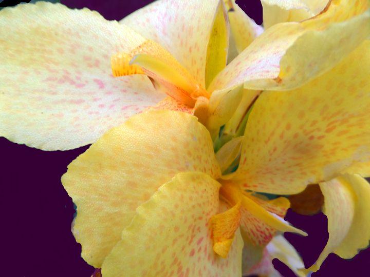 FLOWERS 141 - Pepsiart