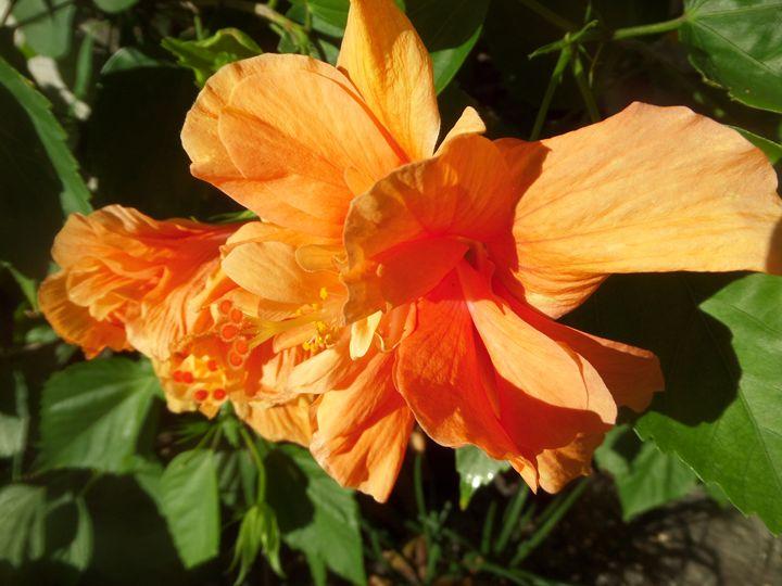 FLOWERS 147 - Pepsiart
