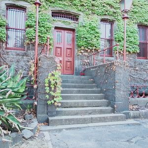 Ivy covered entry and steps