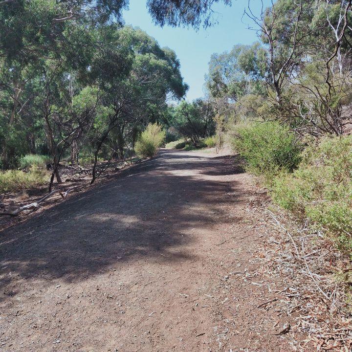 Mysterious Path - Dellene  Becker