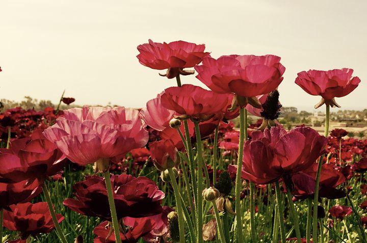 Red Blooms - Bev's Takes