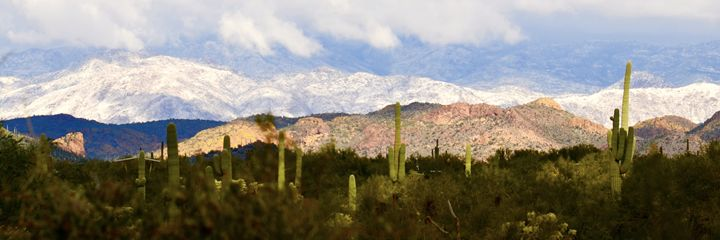 Superstition, Saguaro and Snow - Bev's Takes