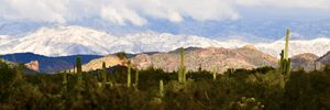 Superstition, Saguaro and Snow