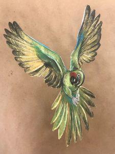 Flying Macaw