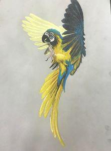 Sprawled Macaw