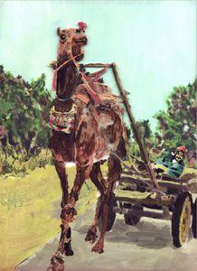 Camel in Braja