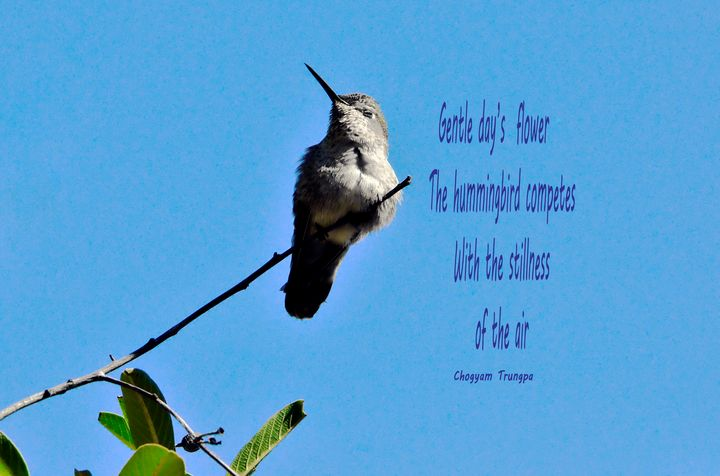 Hummingbird Competes - Fine Art by Debby