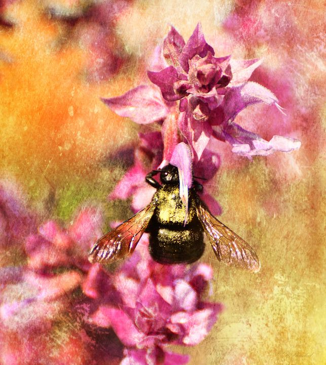 Bumble Bee on Pink - Fine Art by Debby