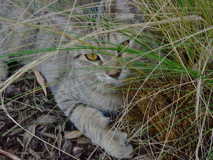 Kitten in the Grass - Fine Art by Debby