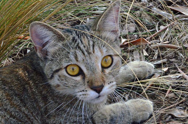 Curious Kitten - Fine Art by Debby