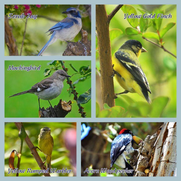 Birds Around My House Collage - Fine Art by Debby