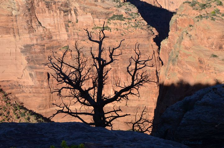 Silhouette Tree Against Canyon De Ch - Fine Art by Debby