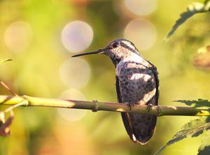 Hummingbird at Dusk - Fine Art by Debby