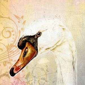 White Swan, Vintage - Happy Bird Studio