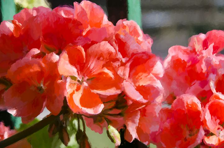Red Geraniums - Created by Laurel