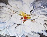 White Dahlia blossom