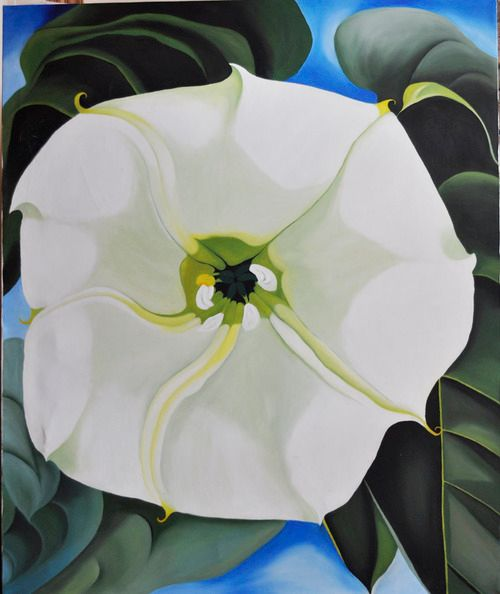 Jimsonweed blossom [copy] (117) - Flower Art Gallery