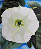 Jimsonweed blossom [copy] (117)