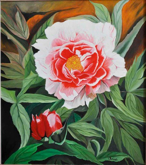 Pink Peony still life (133) - Flower Art Gallery