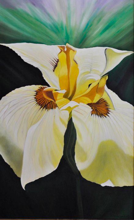 White Bearded Iris blossom (181) - Flower Art Gallery