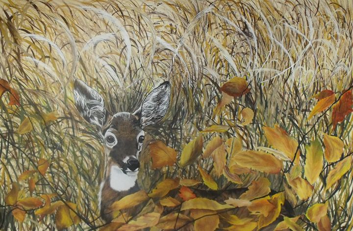 Deer in Meadow - Memory's Gallery