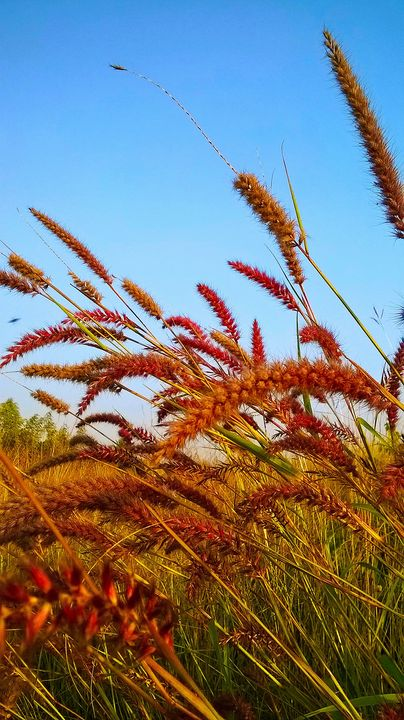 Red fountain grasses - India Tribal Art