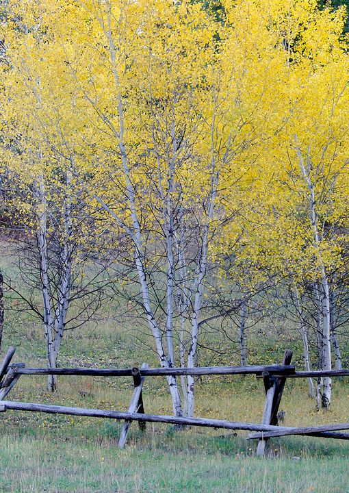 A Yellow Fall - Rick Nye's Art On Canvas