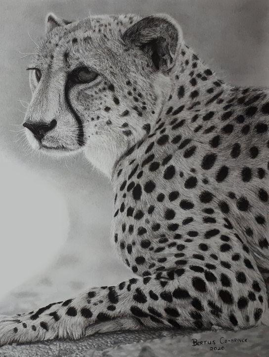 Cheetah At Rest - Bertus Combrinck