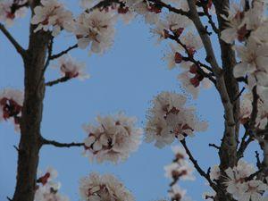 Sky & Blossoms