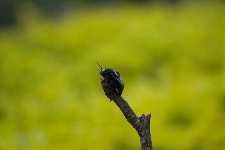 bug on stick - A.R ART PHOTOGRAPHY