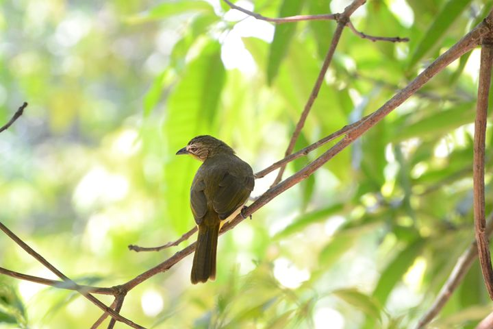 Bird on Branch - A.R ART PHOTOGRAPHY