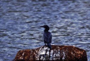 fishing bird - A.R ART PHOTOGRAPHY