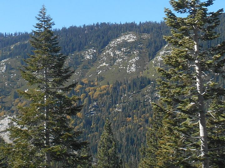 Sierra Nevada Forest - Razgriz2015